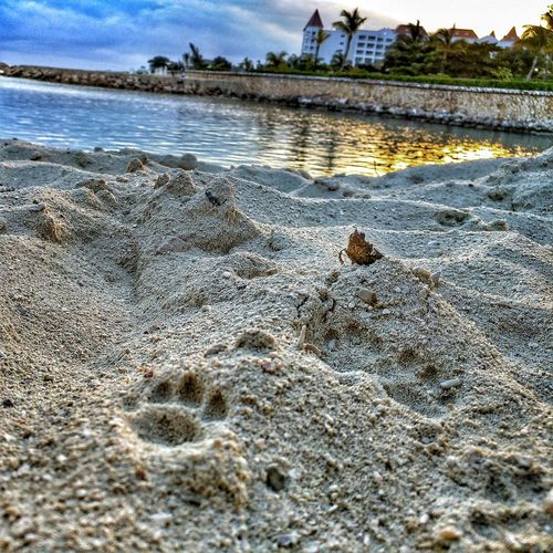 Beach Showcase: February Sand & Sea Footprints In The Sand Animal Animal Photography Paw Print Perspective Sand Art