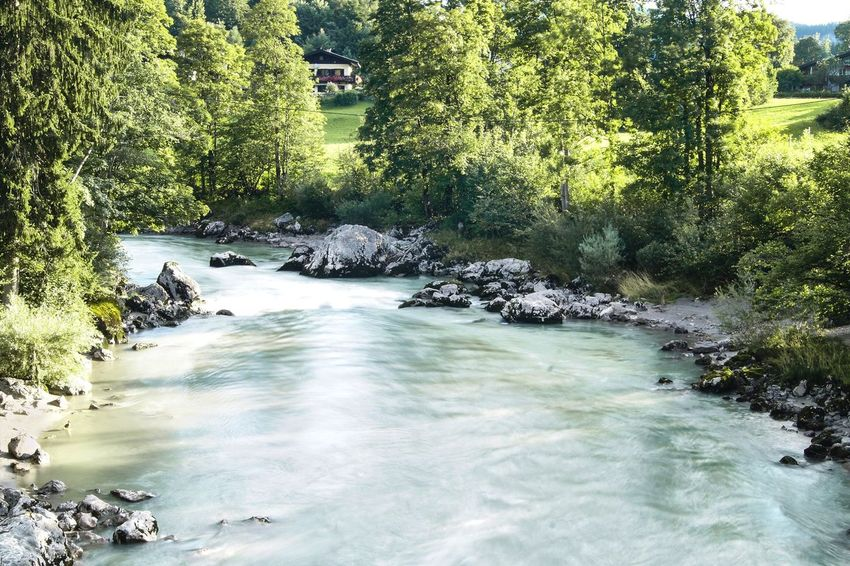 Blue River with Rocks Wanderlust Water Tree Plant Nature Beauty In Nature Scenics - Nature Day Growth Tranquility Land No People Sunlight Outdoors Non-urban Scene Green Color Rock Tranquil Scene Flowing Water River Flowing