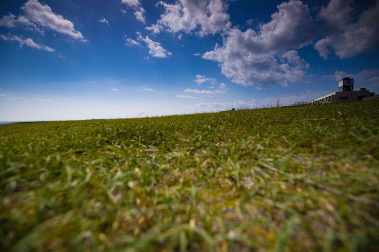 Sunset Flower Rural Scene Beauty Summer Hill Blue Meadow Field Sky