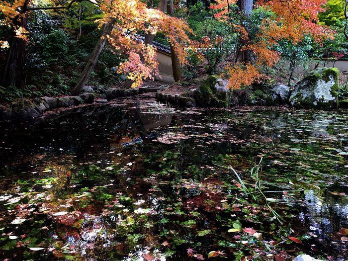Autumn Reflection Nature Kyoto 即宗院