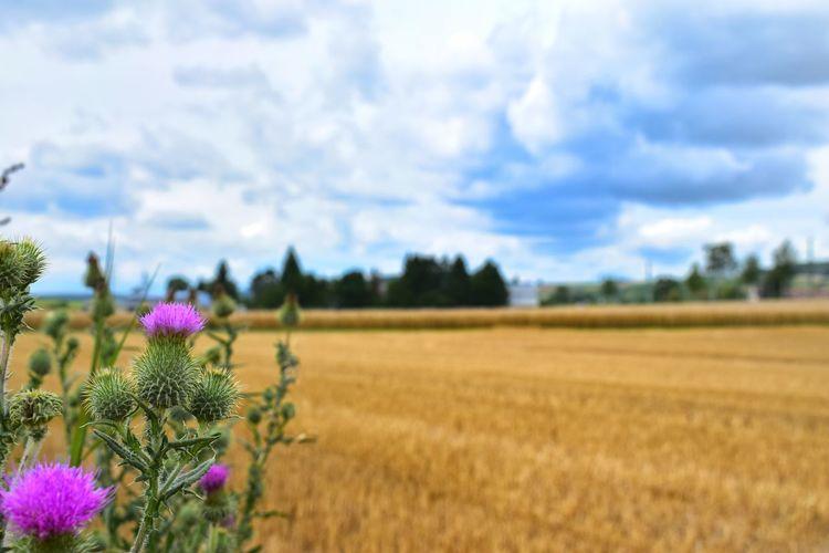 View of flowers growing in field