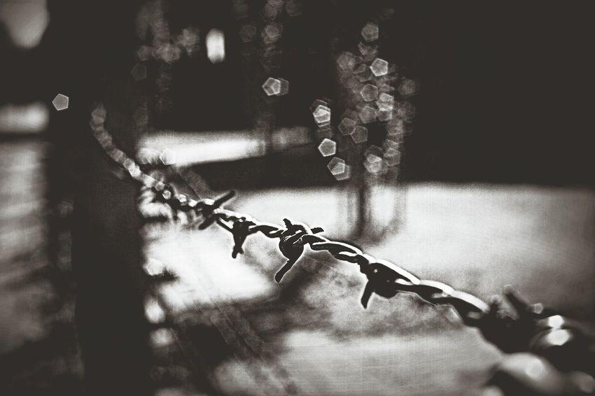 No People Museum Prisoners Prisoner Of War Aushwitz-Birkenau Aushwitz Concentration Camp Poland