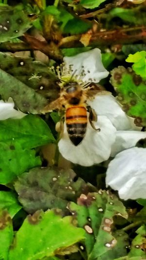 Honey Bee Collecting Nectar Wildflowers Springtime Flowers Outdoor Photography Nature Photography Micro Nature Micro