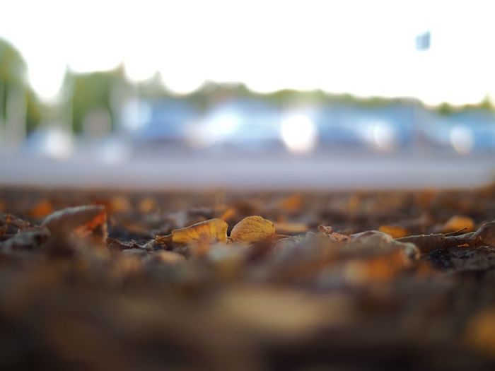 Railroad Track Selective Focus Surface Level Transportation Rail Transportation Metal Stone - Object Travel Close-up Mode Of Transport Outdoors Day Extreme Close-up Railroad Tracks Curve Image Focus Technique No People Shallow Depth Of Field Autumn🍁🍁🍁 Autumn Autumn Colors