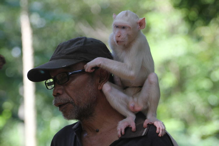 male type albino monkeys found in the forest and given protection rights to the management of wildlife parks. EyeEmNewHere Monkey Albino Ape Zoo Zoo Animals  Forest Monkey White Animal Animal Themes Animal Wildlife Green Environment Environmental Conservation