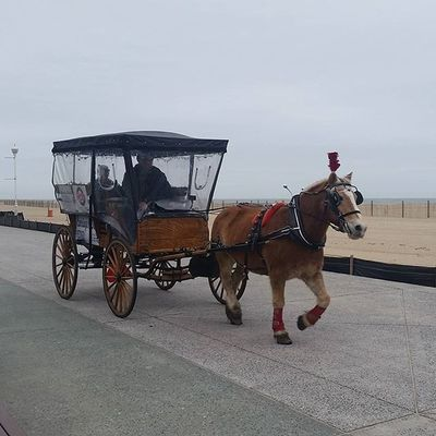 Come on down for your Horse & Carriage Ride... Oceancitycool OceanCity Maryland Ocmd Boardwalk Rides