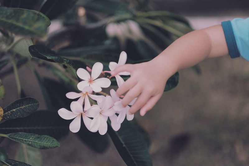 Cropped hand touching flowers