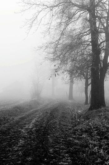 Winter Mist Freezing Nature Bosnia And Herzegovina Love Bosnia Odzak Blackandwhite Traveling Endlessness