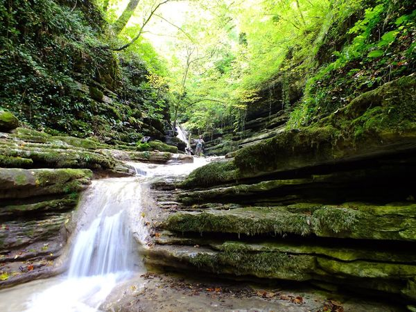 Nature Photo Waterfall Forest Nature Tree Beauty In Nature Scenics River Lush Foliage Tranquil Scene No People Tranquility Water Outdoors Day Green Color Long Exposure Motion Eye4photography  Travel Destinations Growth Photography Turkey Nature Photography