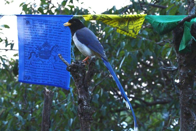 EyeEmBirds Eye4photography  EyeEm Nature Lover Birds_n_branches Birds Wildlife Birds Of Paradise Enjoying Myself Watching Birds ...blue Megpie 😍😍😍😍😍