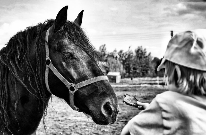 The thing you wanted, I brought it for youSommergefühle Horse Horse Photography  Bread Feeding  Feeding Animals Feeding Horses Feeding Horse Blackandwhite Black And White Black & White Blackandwhite Photography Domestic Animals Animal Themes Rural Scene Lithuania Dusetos Countryside Country Life