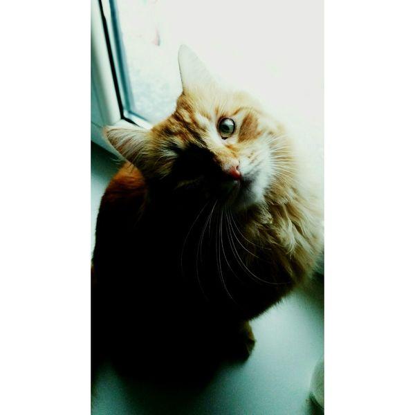 Cat♡ Purring Meow Morning Riseandshine Beautiful Day Hello World