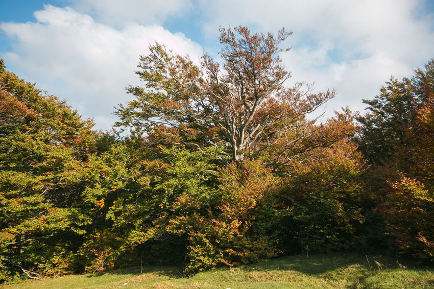 Monte Cucco in the autumn season, Umbria, Italy Autumn colors Autumn Beauty In Nature Beech Cloud - Sky Environment Fall Foliage Forest Growth Land Landscape Leaf Leaves Monte Cucco Nature No People Park Plant Plant Part Scenics - Nature Sky Tranquility Tree Umbria