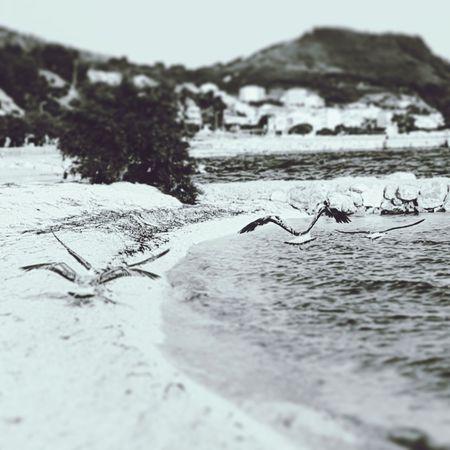 #seagulls #EyeEmNewHere #blackandwhite #photography #Nature  #croatia #croatiafulloflife #Creativity  #Blackandwhitephotography #travel #EyeEmBestShots #EyeEm #sea #photo Bird UnderSea Mountain Sea Life Water Sea Beach Animal Themes Close-up Landscape