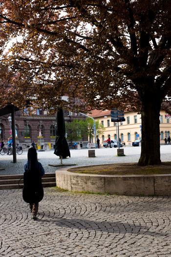 Alone City Life Leisure Activity Lifestyles Street Tree Weimar