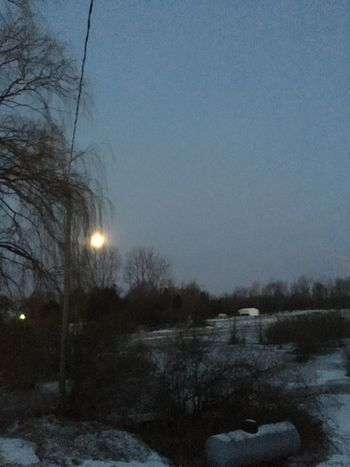 The moon is beautifully setting in the hazy sky. The sun will rise soon with a morning kiss us with a blessing of a good day. Happy Friday to all of you!!! Winter Cold Temperature Snow Tree Nature No People Illuminated Outdoors Sky Beauty In Nature Moon No Filter, No Edit, Just Photography Exceptional Photography Idyllic View EyeEm Master Class OriginalPhoto Photography By Me This photo received a 72% on the Roll. Wonderful Time Blessed To See This Taken On Mobile Device EyeEm Masterclass Every Day Is A New Day Female Photographer Tranquil Scene