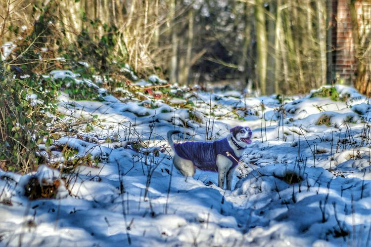 My happy dog, Lola Snow Winter Cold Temperature Weather Nature Outdoors Beauty In Nature Day No People Tree Frozen Plant Animal Themes Tranquility Snowing Mammal Dog My Dog Winter EyeEm Nature Lover EyeEm Nature Collection One Animal Snow ❄