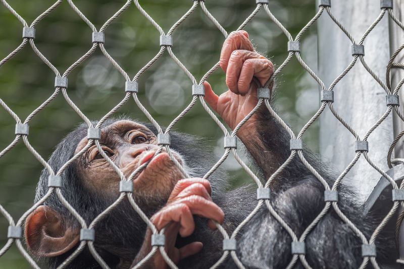 Close-up of man with chainlink fence in cage at zoo
