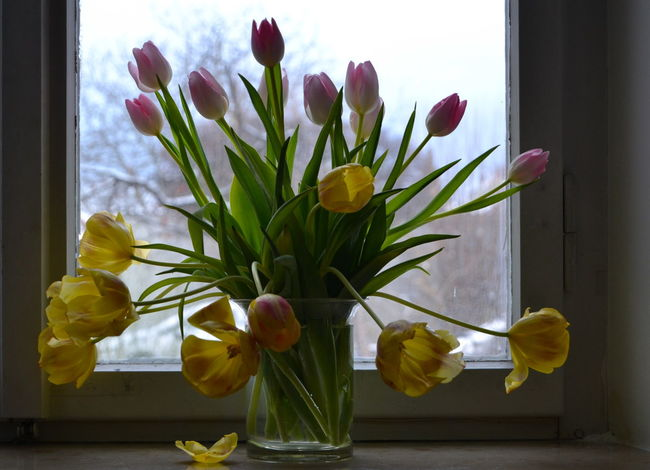 Beauty In Nature Bunch Of Floweres Close-up Day Flower Flower Arrangement Flower Head Fragility Freshness Growth Home Interior Indoors  Leaf Nature No People Petal Plant Spring In Winter Tulip Vase White-pink Tulips Window Window Sill Yellow Yellow Tulips
