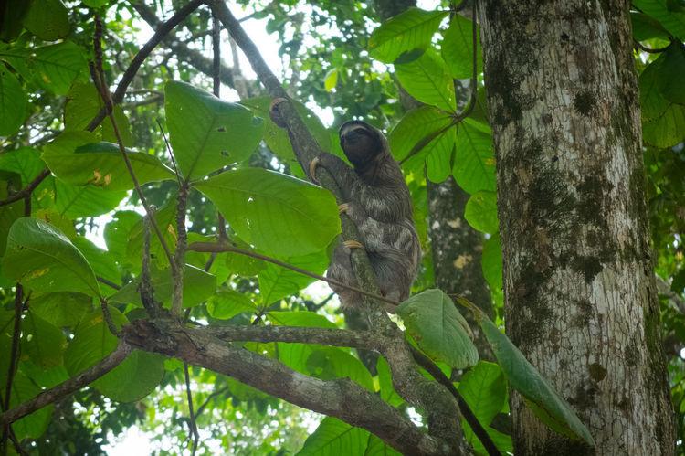 Costa Rica Hiking Tree Beach Carribean Hike Jungle Ocean Road Trip Sloth Wildlife