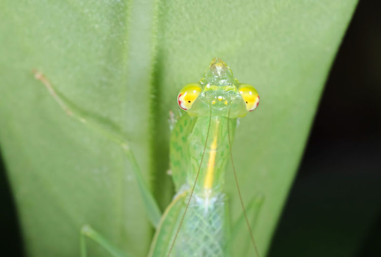Extreme close-up of insect on plant