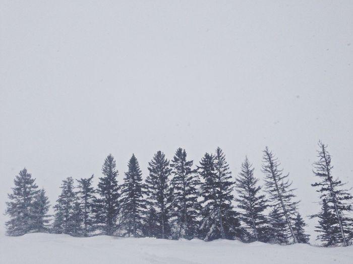 Winter White By CanvasPop