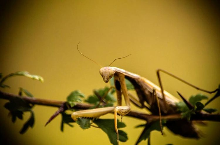 Check This Out Naturelovers EyeEm Best Shots - Macro / Up Close Hi!