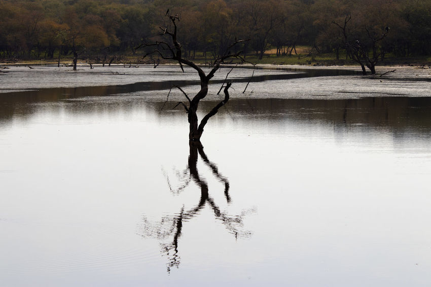 Reflections at Rathembore national Park India Water Tree Reflection Tranquility Lake Tranquil Scene Scenics - Nature Non-urban Scene No People Outdoors Rathembore National Park Beauty In Nature