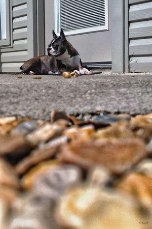 """Boss"" basking in the sun My Furry Kid"
