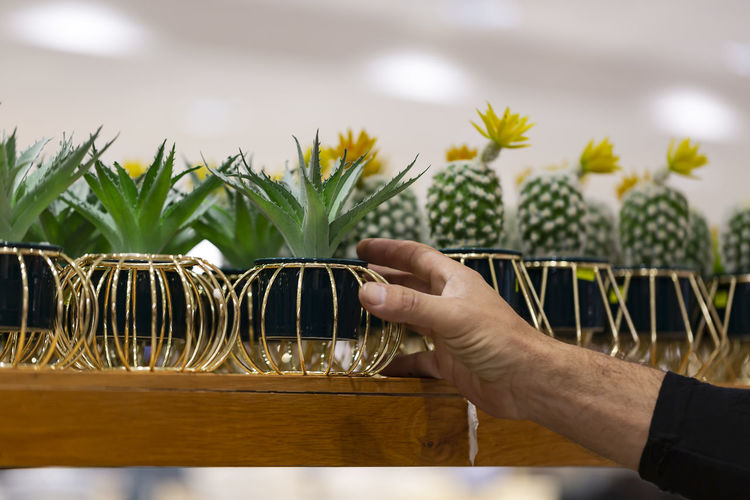 Cropped hand holding succulent plant