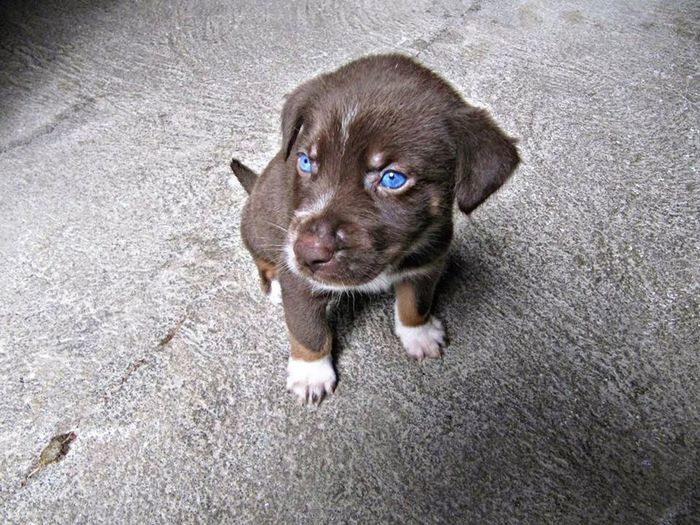 My Dog ;D Scooby Lindãomeu Melhor Amigo 👍 Fabiomiquelino