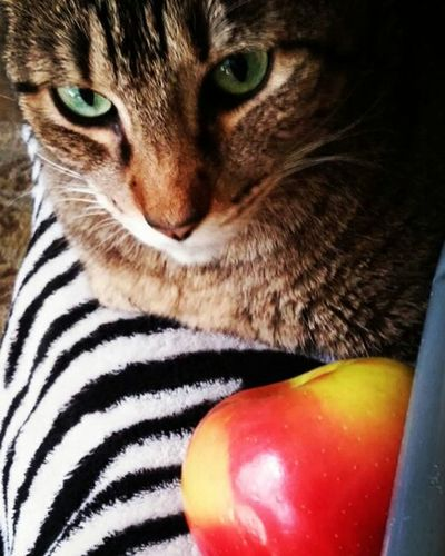 Catlove Cat Cats Meow Purrfect Appleaday Apple MyBoy My Cat Mypal MyTT