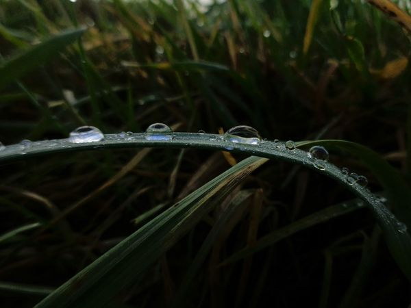 Nature Close-up Water Beauty In Nature Plant Blade Of Grass Outdoors EyeEmNewHere Green Color Rain Little Things Keep Your Eyes Open Rainy Detail Focus On Details Freshness Focus On Foreground Drop Nature EyeEmNewHere No Filter, No Edit, Just Photography Real Colors No Filters Or Effects No Filter Eyeemmarket