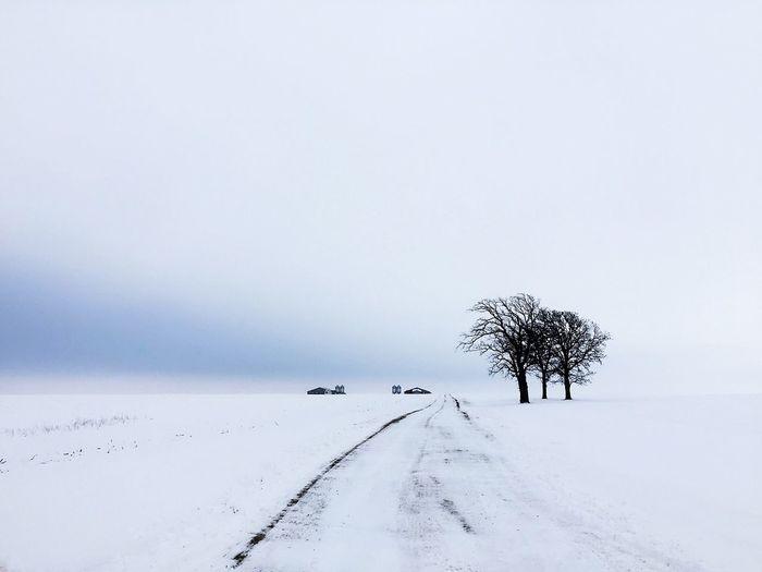 Trees on snow covered beach against sky