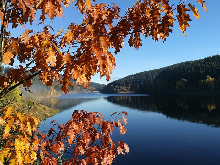Autumn leaves by lake against sky