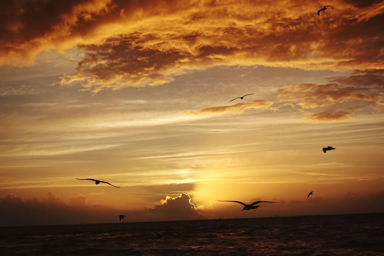 sunset, sky, cloud - sky, flying, beauty in nature, animal themes, bird, animal wildlife, animals in the wild, animal, mid-air, group of animals, silhouette, orange color, scenics - nature, vertebrate, sea, nature, tranquil scene, water, no people, horizon over water, seagull