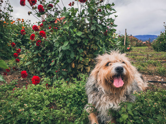 Close-up of a dog against plants