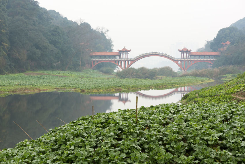 Ancient traditional red bridge in the fog in Leshan, Sichuan Province, China Architecture Beauty In Nature Bridge - Man Made Structure Built Structure Connection Day Fog Freshness Green Color Growth Mountain Nature No People Outdoors Plant Reflection Sky Transportation Tree Water