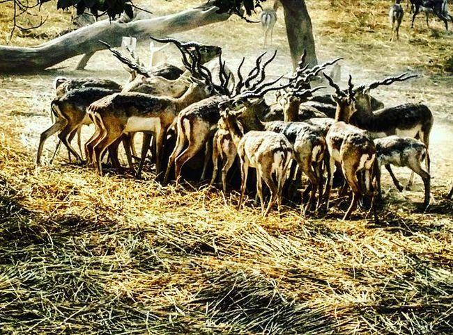 Deer Deerseason Deers Herd Zoo Animals Wildbeauty Wild Nationalzoologicalpark