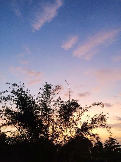 Sky Sunshine Bamboo Thailand