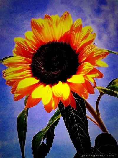 Flowers Flowerporn Sunflower Overedited