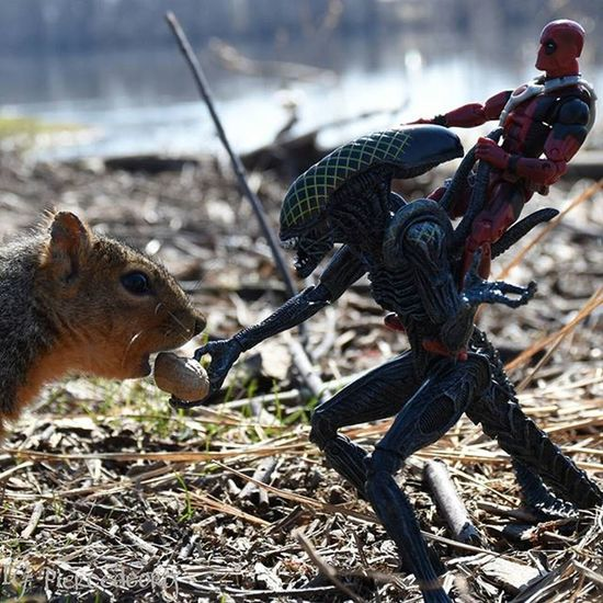 Hi ho Silver tooth! Lets feed him and be on our wayyyyyy! Funwiththesquirrels Neca Necatoys Gridalien Deadpool Toyhumor Realmofcollectorschallenge Luckywiththeanimals 7daysofnature day 4
