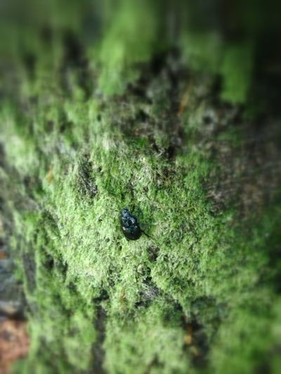 IPhoneography A Walk In The Woods Insects  EyeEm Nature Lover