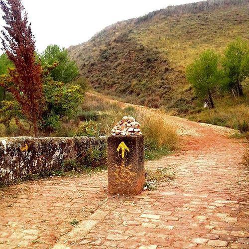Keep walking :) CaminodeSantiago Yellow Signature Followthestars Nature SPAIN Walking