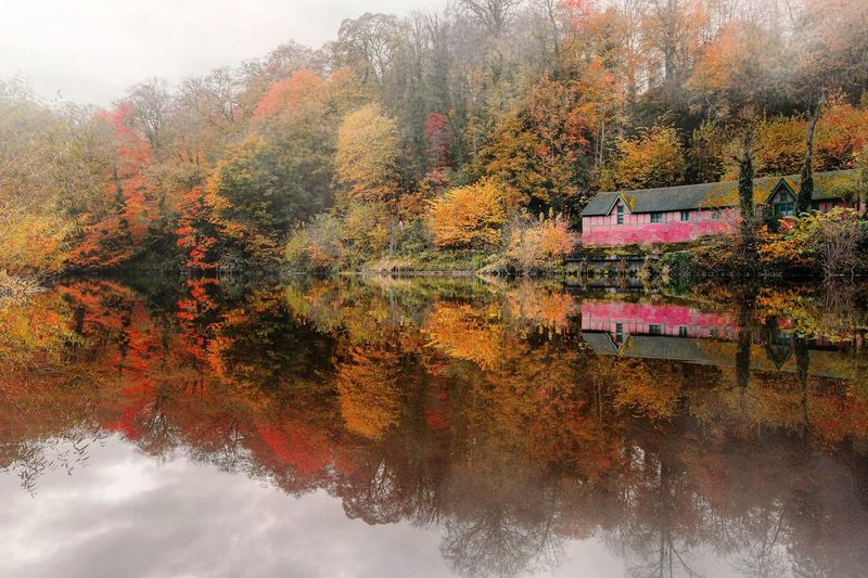 Reflection of trees on lake during autumn