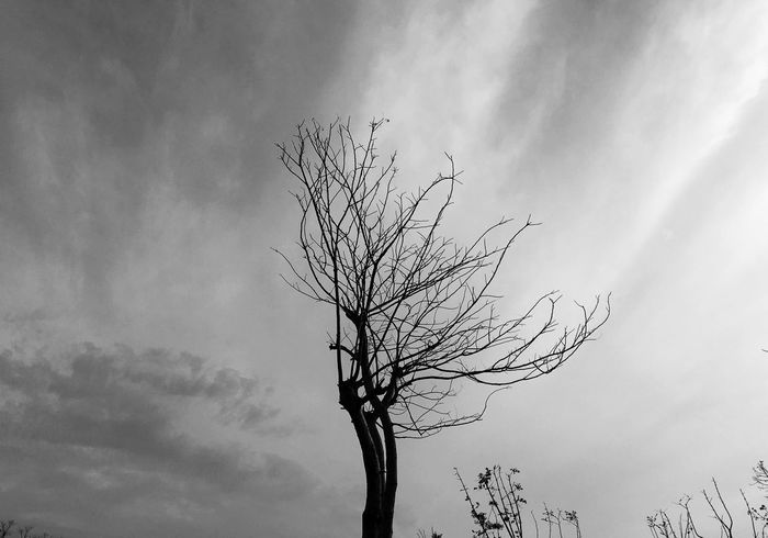 Tree And Sky GG Eyss Black And White Blackandwhite Eye Em Nature Lover B&w Street Photography Clouds And Sky Monochrome