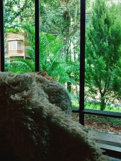 Nature Window