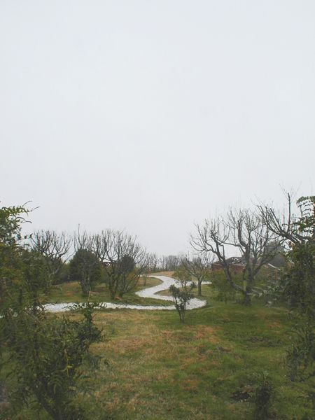 Foggy Taking Photos Mountains Tree Porn