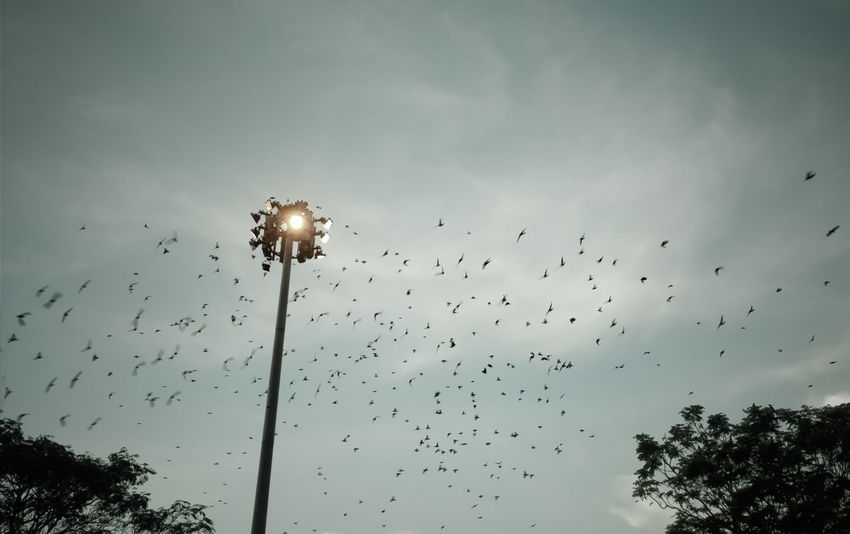 Cinematic evening Shooting Nature_collection Nature_landscape Birds_collection Bird Flying Flock Of Birds Tree Silhouette Mid-air Sky Animal Themes Migrating Bird Of Prey