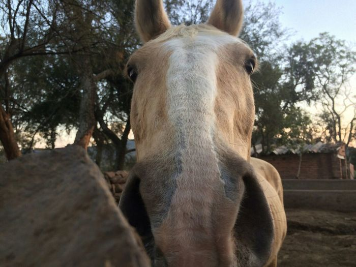 Horse <3 Animal_collection Animal Love I Love Horses Nature_collection Animals
